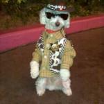 vm_2011_cute_dog